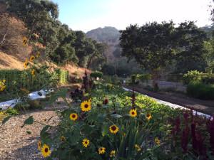 wente garden3