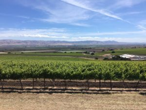 Santa Lucia Highlands 2