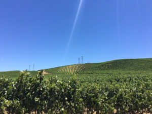 murrietas-vineyards-2